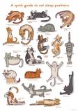 A quick guide to cat sleep positions - Nikola Kucharska