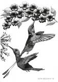 Krysia's hummingbirds - Justyna Brzozowska