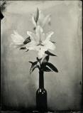 Kwiaty - Joanna Borowiec