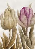 Tulipany 3 - Anna Wojciechowska-Paprocka