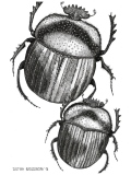 Scarabs - Justyna Brzozowska