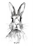 Rabbit - Agnieszka Nawrat