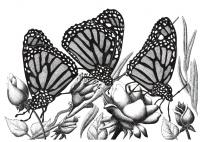 Schmetterlinge - Justyna Brzozowska