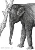 Elephant - Justyna Brzozowska