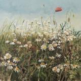 Margaretki z Lelystadt z cyklu Przez Kwiatki - Aleksandra Rey