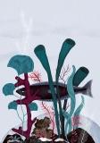 Fish - Anna Rudak