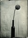 Kwiat5 - Joanna Borowiec