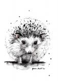 Hedgehog - Agnieszka Nawrat