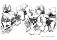 APPLE TREE - Justyna Brzozowska