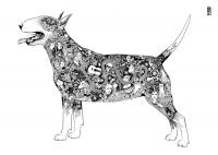 Bull terrier - Malwina de Brade
