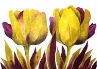 Tulipany 5 - Anna Wojciechowska-Paprocka