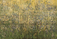 Meadow from the series Herbarium - Aleksandra Rey