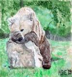 Niedźwiedzi - Alexey Esaulenko