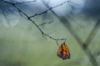 Butterfly - Małgorzata Marczuk