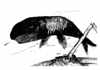 Nocny wieloryb - ROKSANA ROBOK