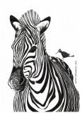 Zebra - Justyna Brzozowska