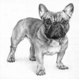 Der Hund  - Ola Lis