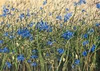 Hungarian Flowers from the series Herbarium - Aleksandra Rey