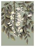Acacia / Trust - Małgorzata Wysocka