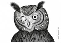 Owl - Justyna Brzozowska