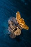 Autumn impression III - Małgorzata Marczuk