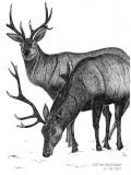 Deers - Justyna Brzozowska