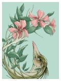 Vinca Blume / Durst - Małgorzata Wysocka