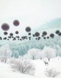 Forest Phantom, Eugene Soloviev