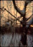 008 Afterimages - Wojciech Walkiewicz