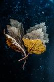 Autumn impression II - Małgorzata Marczuk
