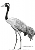 Crane with torsion - Justyna Brzozowska