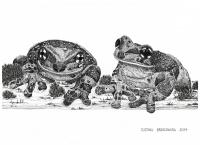 Amazon milk frogs - Justyna Brzozowska