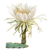 Magiczny świat roślin – plakaty botaniczne vintage