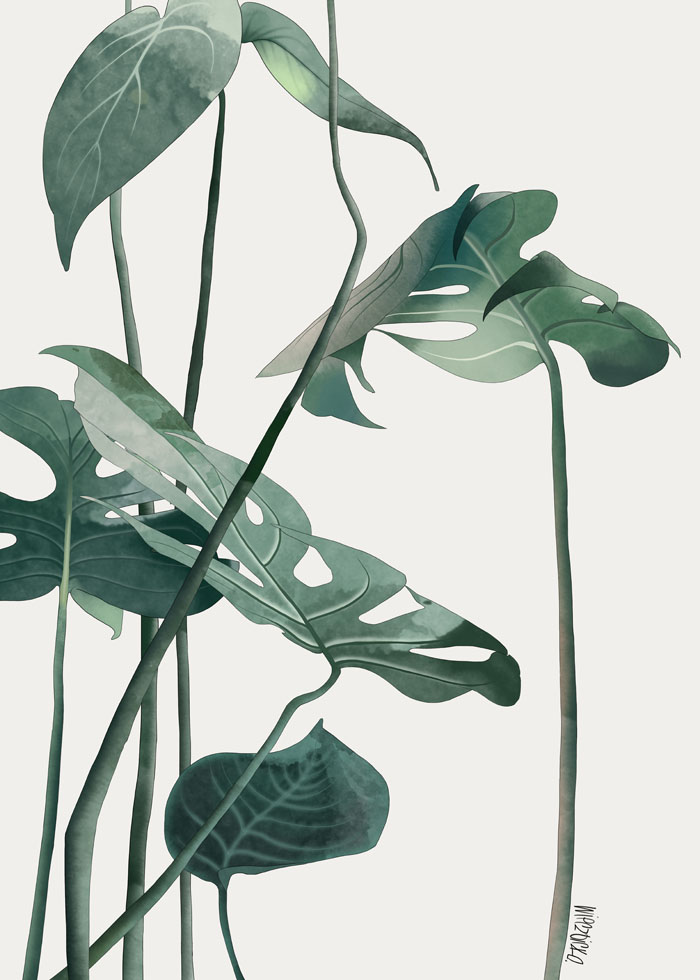 Agata Wierzbicka, Monstera Leaves