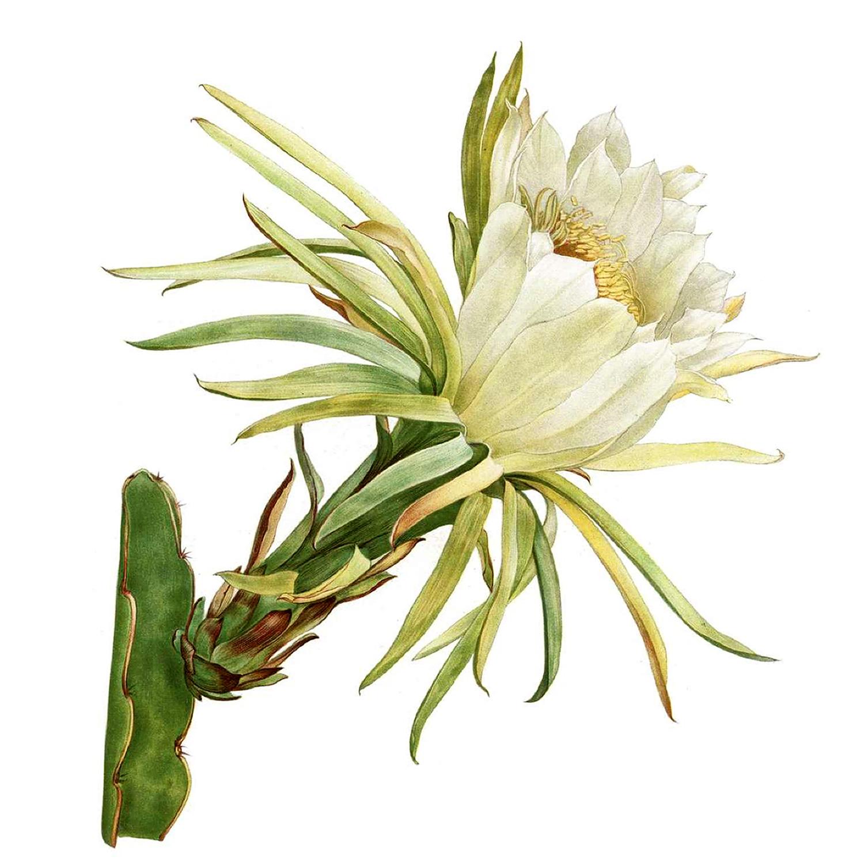 plakat botaniczny kwiaty