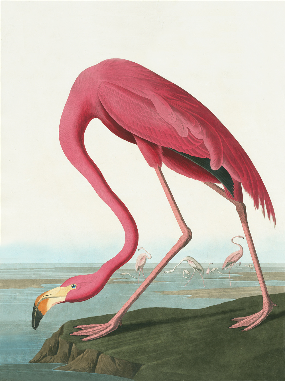Różowy flaming ilustracja botaniczna