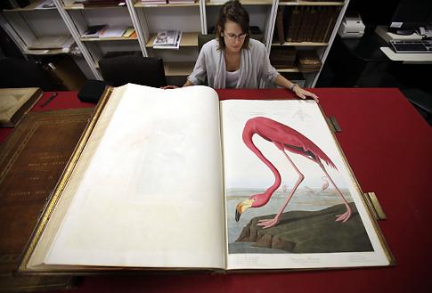 dawne ryciny przyrodnicze - ptaki