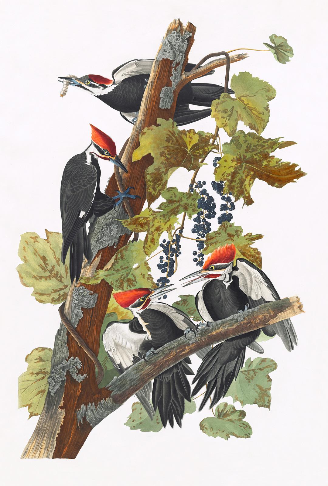 plakat ptaki