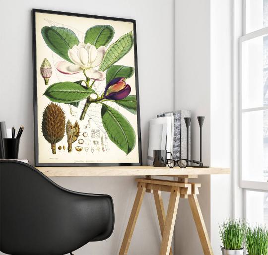 ilustracja botaniczna magnolia