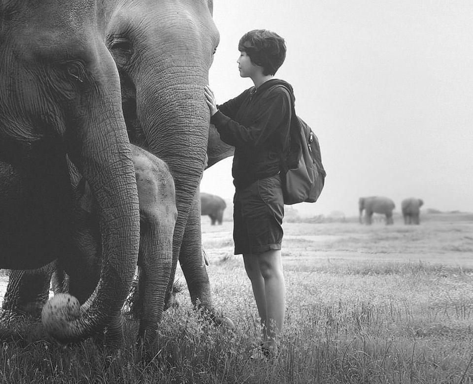 Elicia Edijanto i słonie