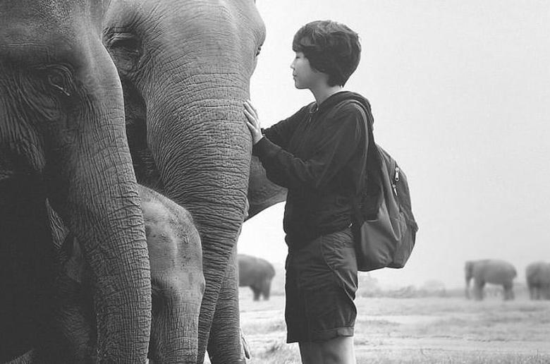 Elicia i słonie